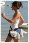 04-funny-animals-dog-bag