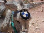 drobmw-mule