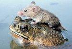 drole grenouille