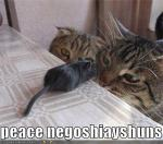 funny-pictures-cats-mouse