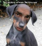 funny_dog_man_doctored_picture
