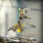 birds+flying+kiss