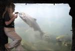 drole fish o