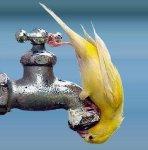 drol soif