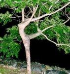 arbre_sexy_007