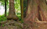 sex-tree