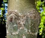 sexy-tree-009