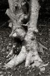 sfe-arbre-pota