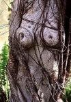 tree w333