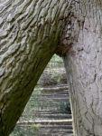 tree w46