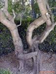 tree w69