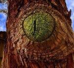 tree w74
