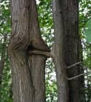 tree_20sex