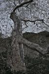 Tree trunk & branch